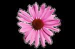 Organic Chester Gardener Logo