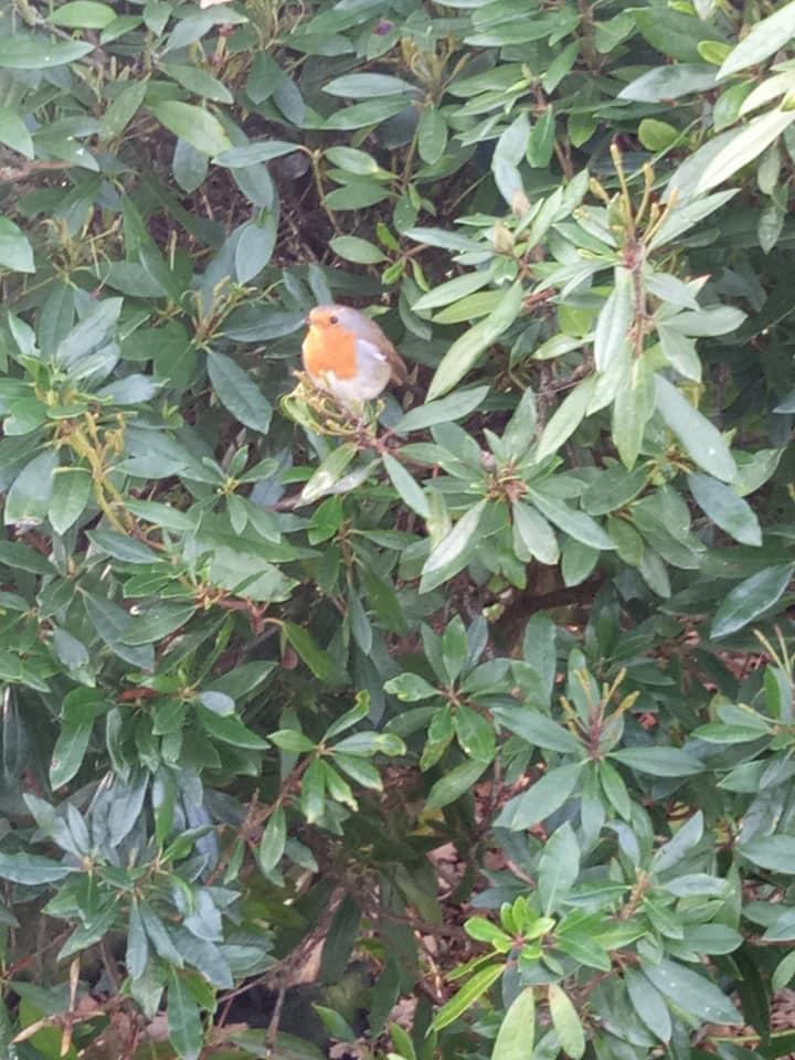 robin whilst gardening